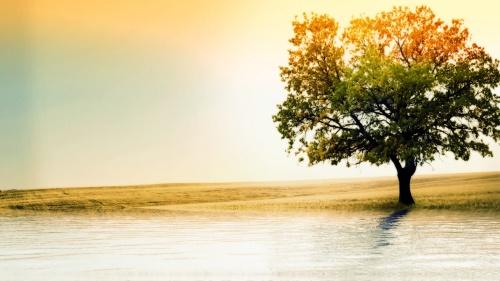 kouincreations_tree_wallpaper